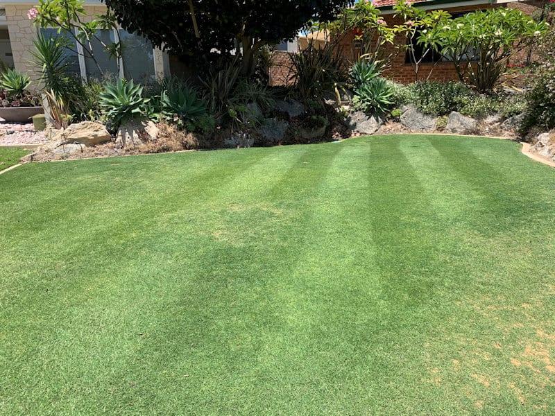 Lawn Renovations Perth