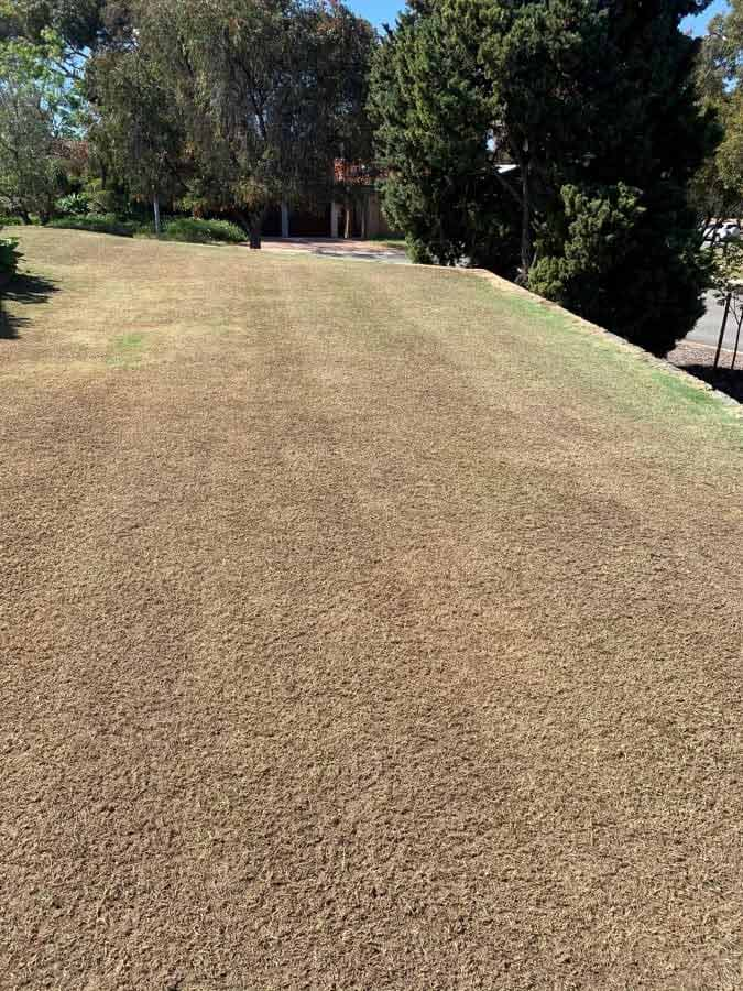 Vertimowing Cost, Lawn Dethatching - Perth WA